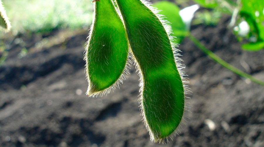 7 beneficis genials de la soja