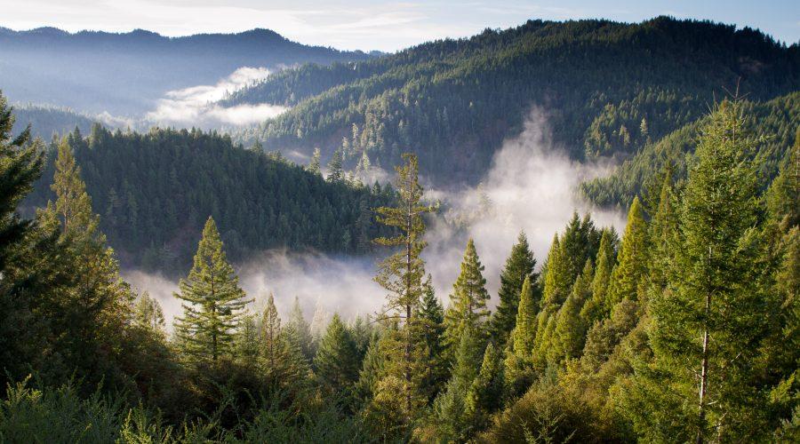 Taller de historias de poder en el bosque