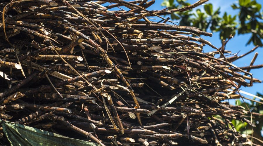 Envasos de canya de sucre: per què són una opció més sostenible?