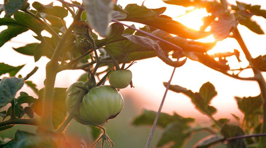 Alimentos bio: buenos para la salud, buenos para el planeta