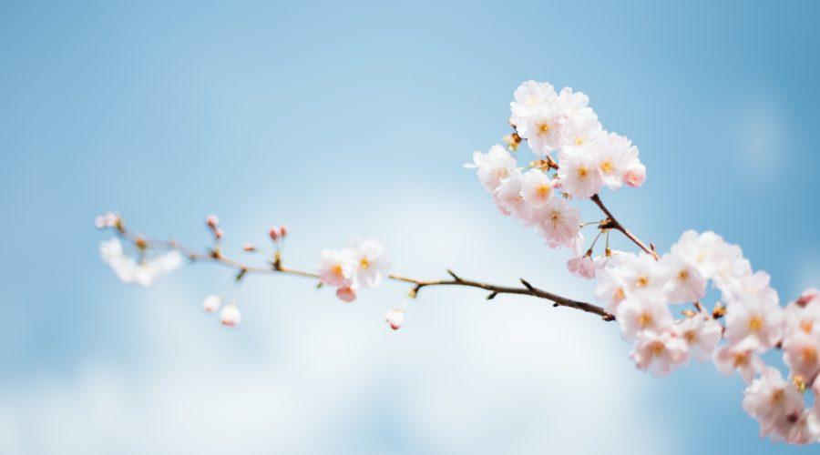 Los mejores suplementos para la primavera